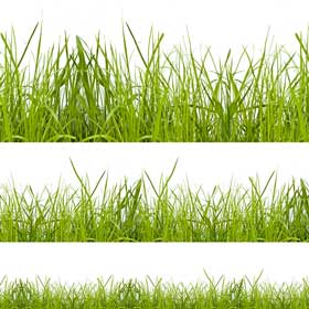 How long? Grass at different lengths.